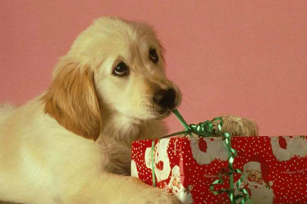 cane e regalo