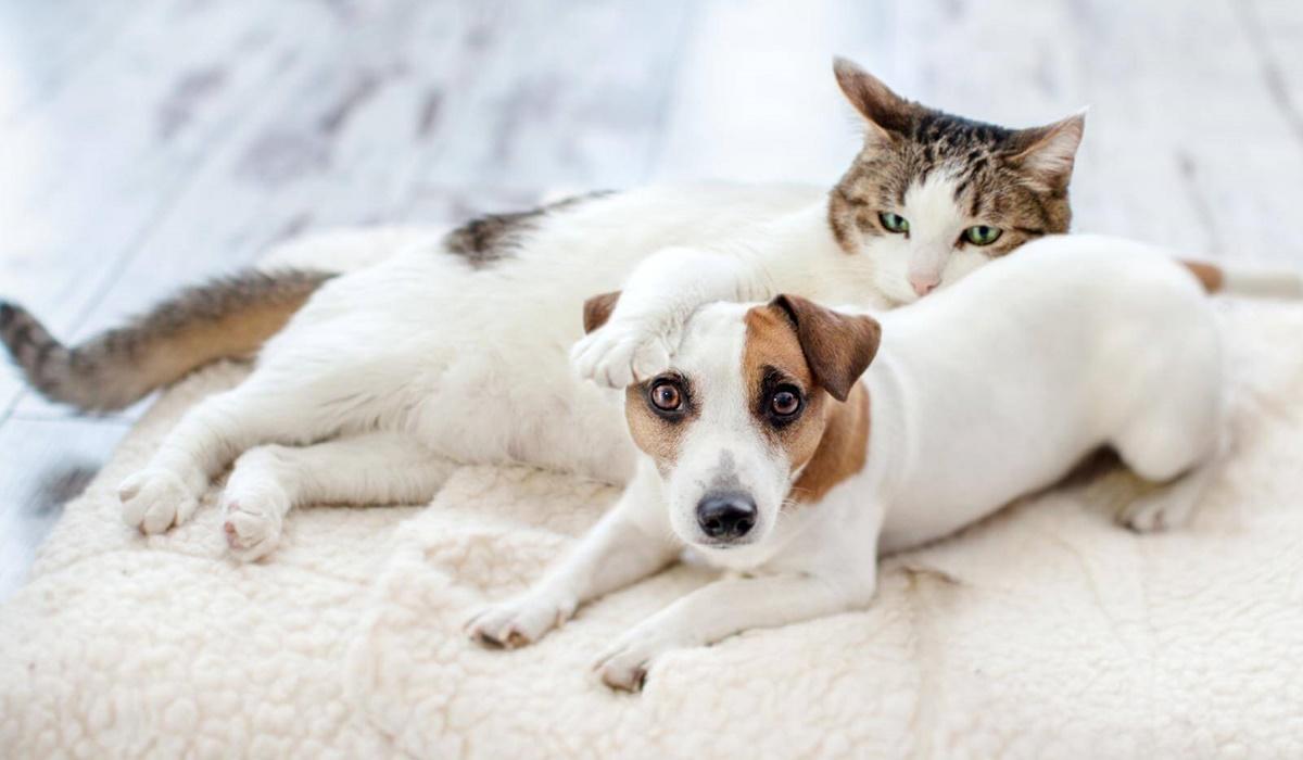 cane e gatto possono convivere