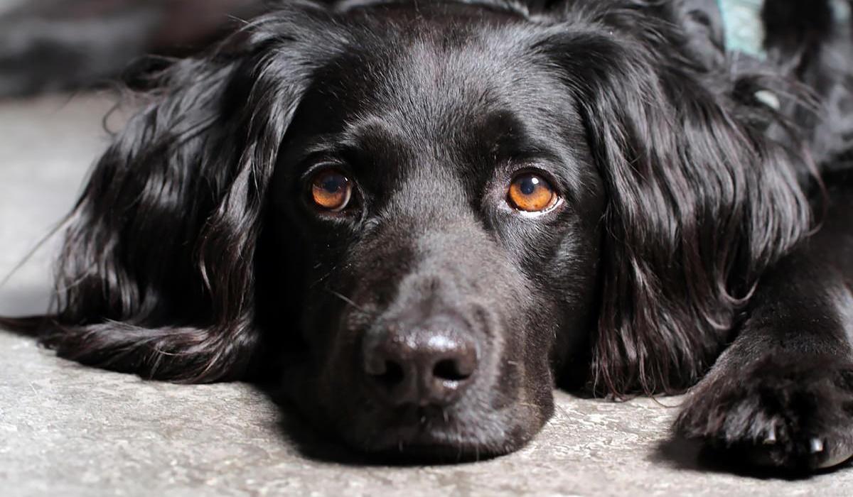 cane con il mantello nero e gli occhi marroni