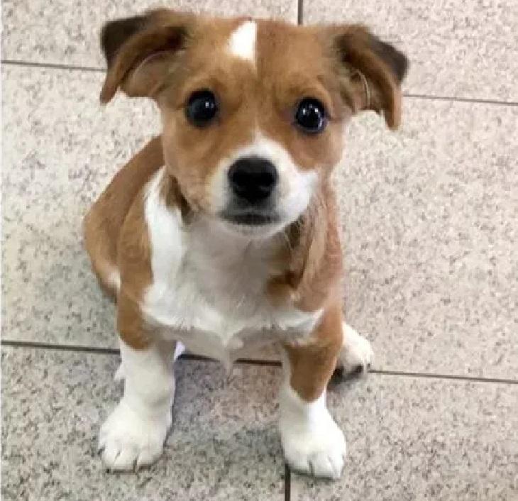 La cagnolina con la rogna viene salvata, la sua trasformazione è incredibile