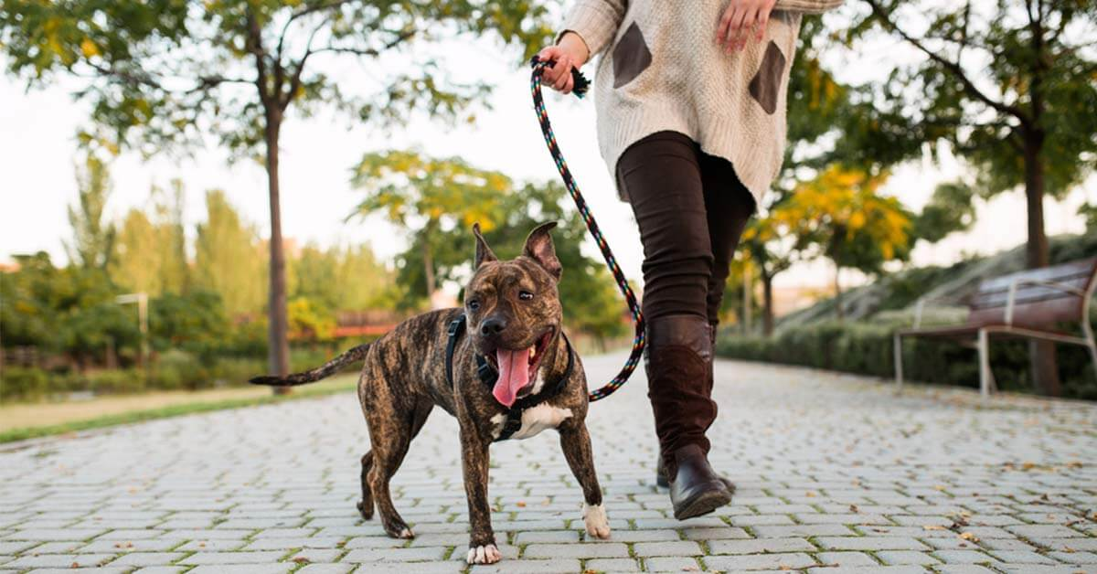 cane a passeggio
