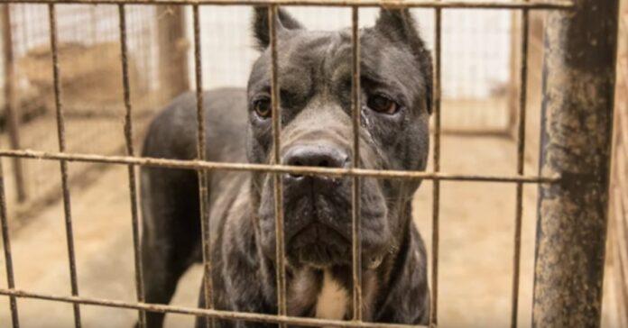 21-cani-e-del-bestiame-salvati-da-un-allevamento-in-pessime-condizioni