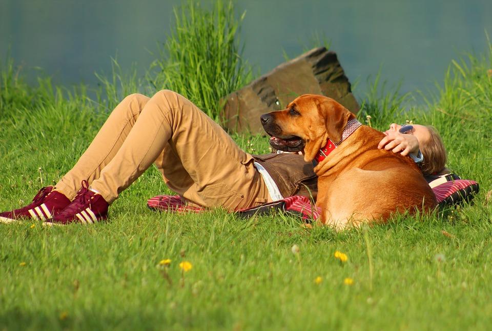 cane con padrone in estate