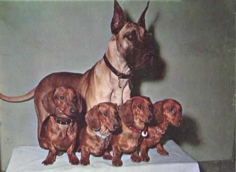 Ricordate Brutus? Ecco tutta la verità sulla storia del cane del vecchio film Disney