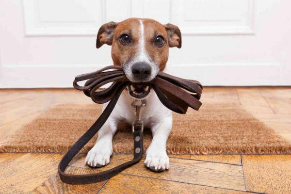 Addestramento del cane al guinzaglio: cosa bisogna sapere