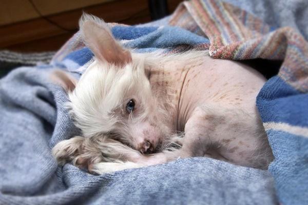 Avvelenamento da rame nel cane, cosa bisogna fare
