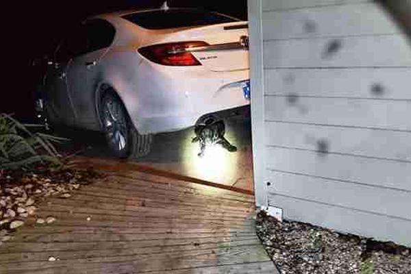 Cane nascosto sotto una macchina