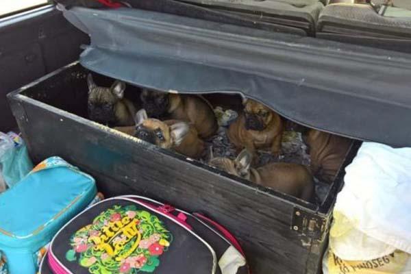 Cuccioli di cane maltrattati