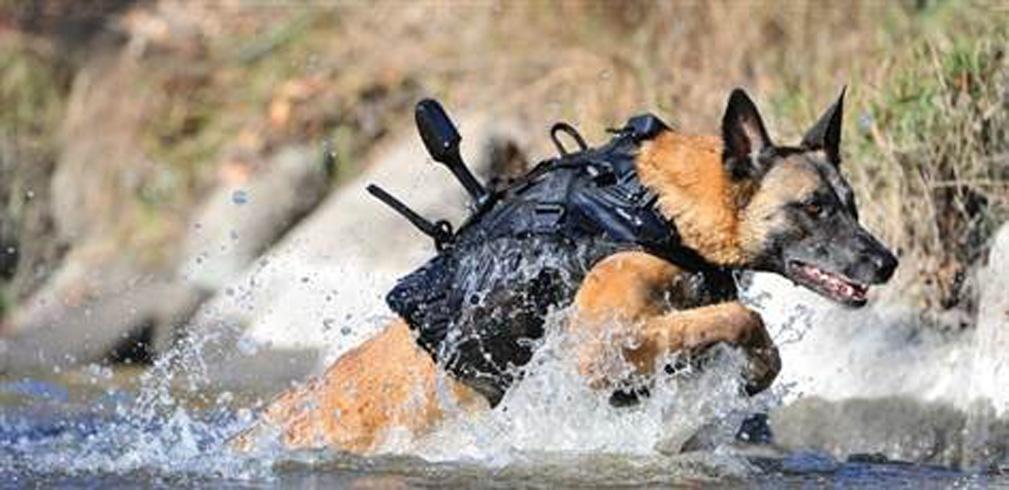Cairo, il cane che fu decisivo per trovare Bin Laden