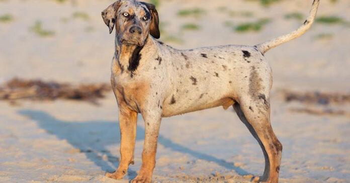 10 razze di cane che potresti non conoscere, davvero uniche