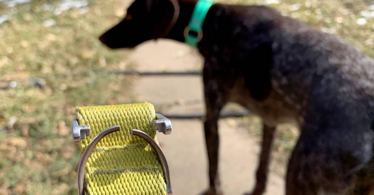 cane e dolori neuropatici