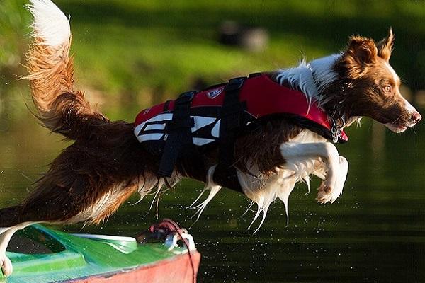 Giubbotto di salvataggio per cani a forma di squalo: divertente e sicuro