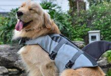 giubbotto salvagente per cani con pinna di squalo