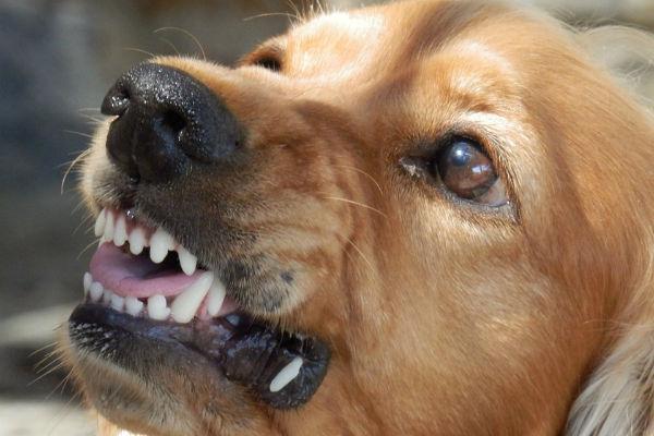 I cani percepiscono l'inganno