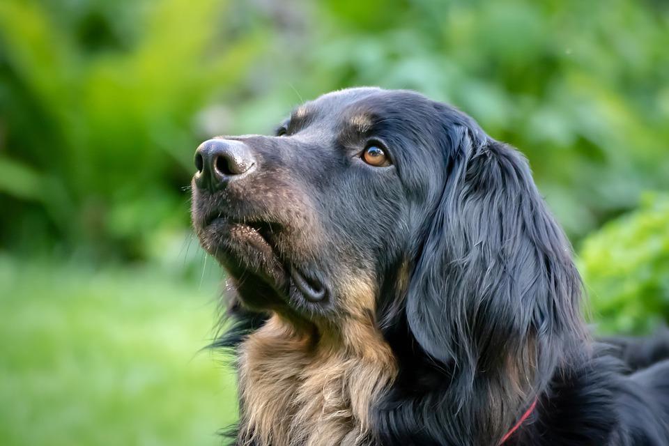cane guarda il cielo