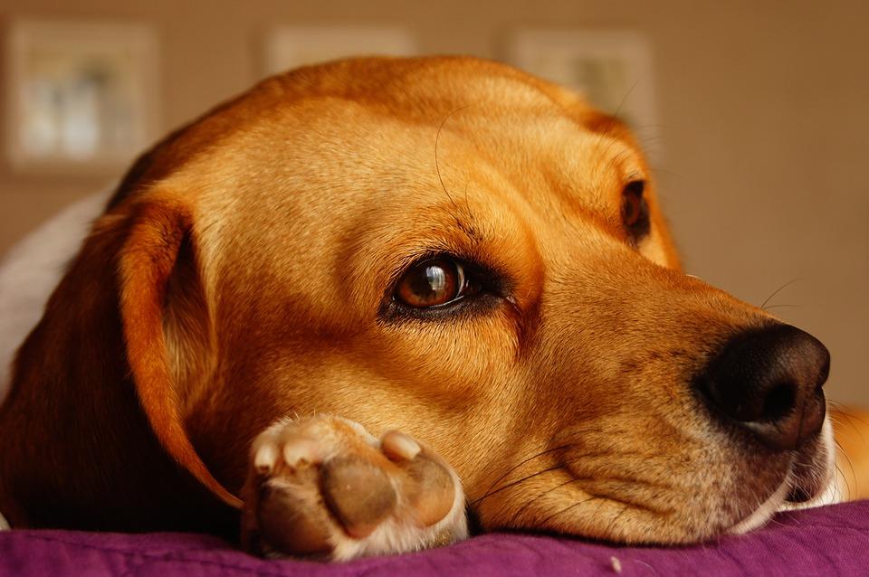 cane che pensa