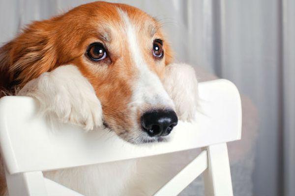 I cani possono sentirsi sicuri di sé?