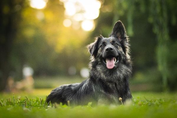 i cani