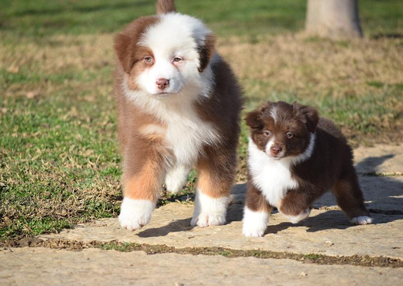 10 razze di cani che potresti non conoscere, davvero uniche