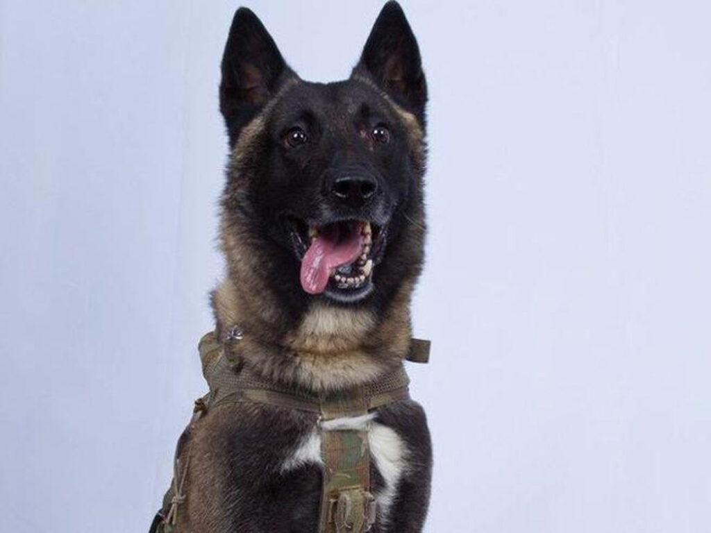 Conan, il cane eroe protagonista del blitz contro l'Isis