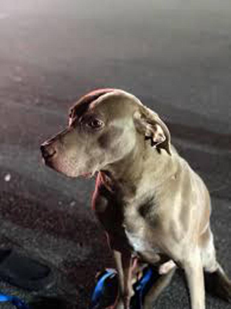 Il cane Sammy