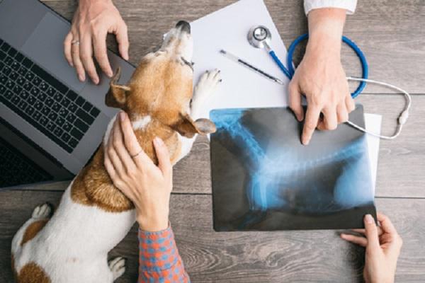 valutazione lastra del cane