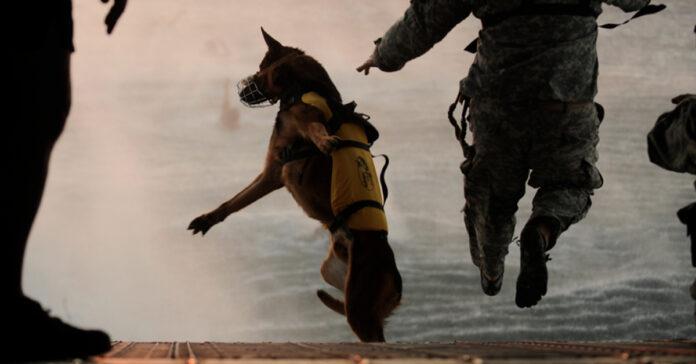 La storia del cane militare Cairo