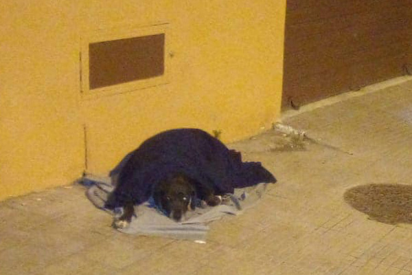 Cane che dorme in strada