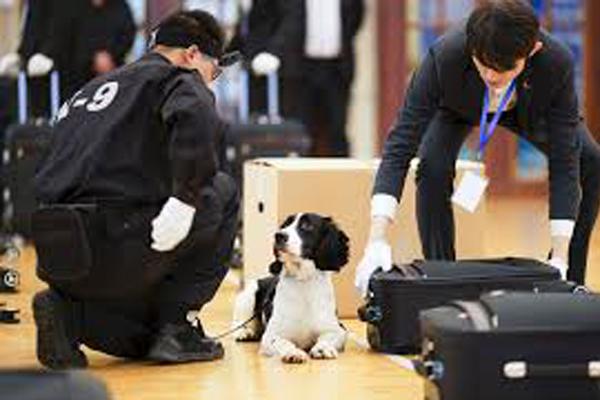 Cane che controlla in aeroporto
