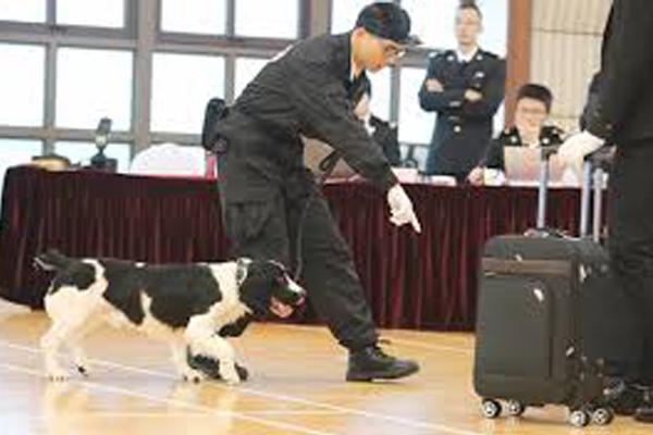 Cane che controlla una valigia