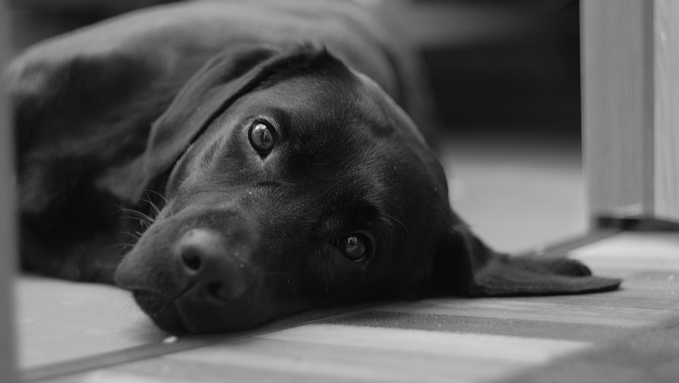 cane nero bellissimo