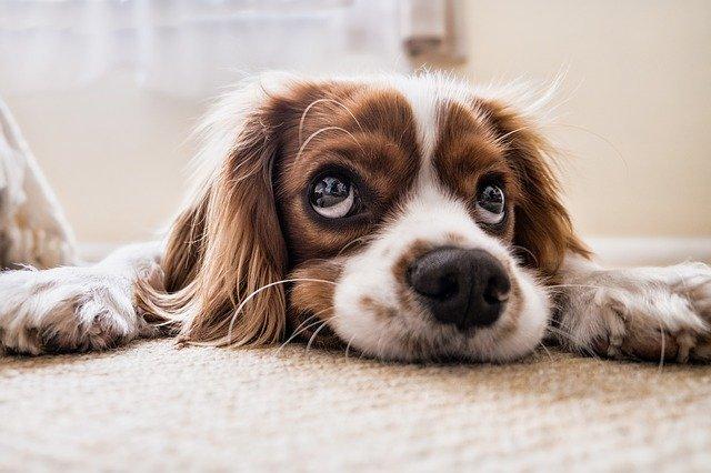 cane è impaziente, perché?
