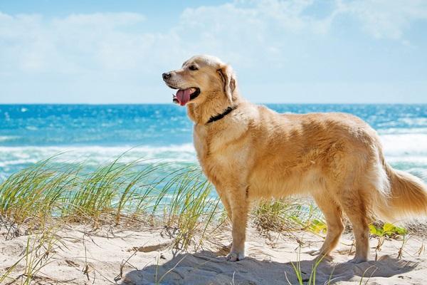 Portare il cucciolo di cane in vacanza: tutti gli accorgimenti da prendere
