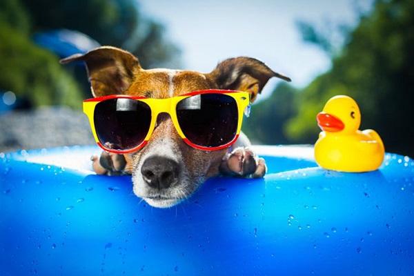 Portare il cucciolo di cane in vacanza