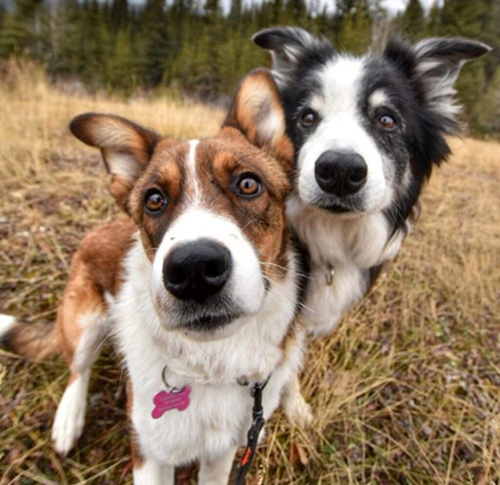 Primo piano di due cani