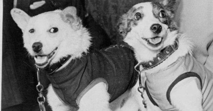 Ricordate Belka e Strelka? Ecco tutta la verità sui cani del programma