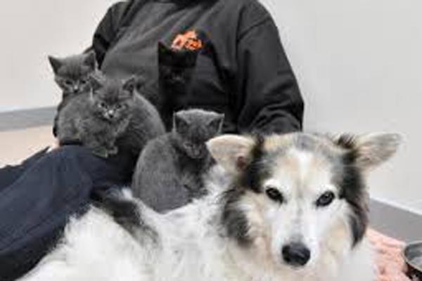 Cane insieme a dei cuccioli di gatto