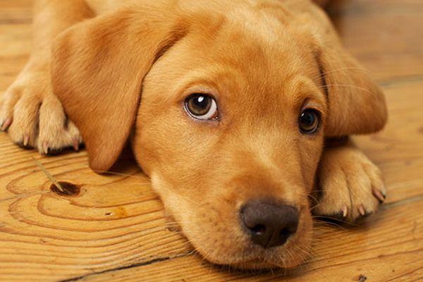 Softilox per cani: cos'è, quando si usa e come funziona