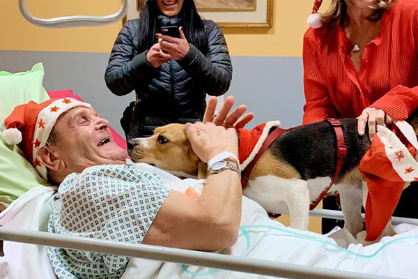 Cane in ospedale con il proprietario