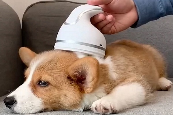 coccolapet per cane