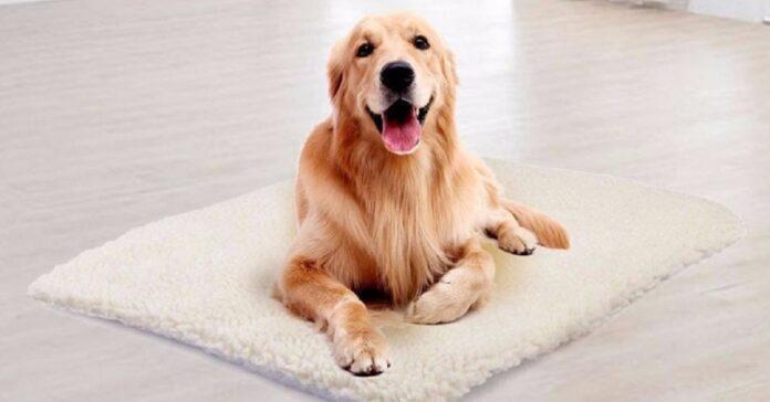 cane su tappetino autoriscaldante