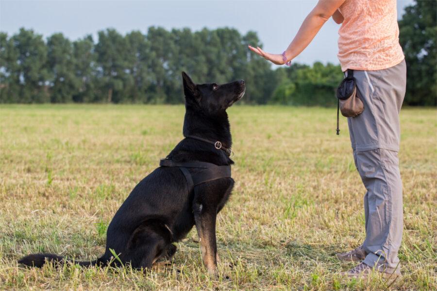 cane obbedisce ai comandi dell'addestratore