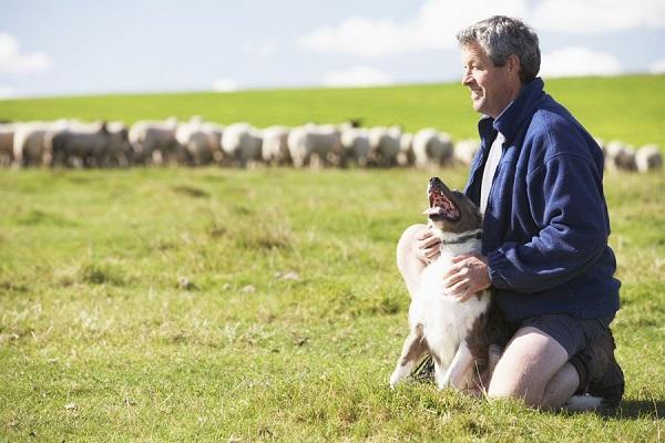 uomo con cane da pastore