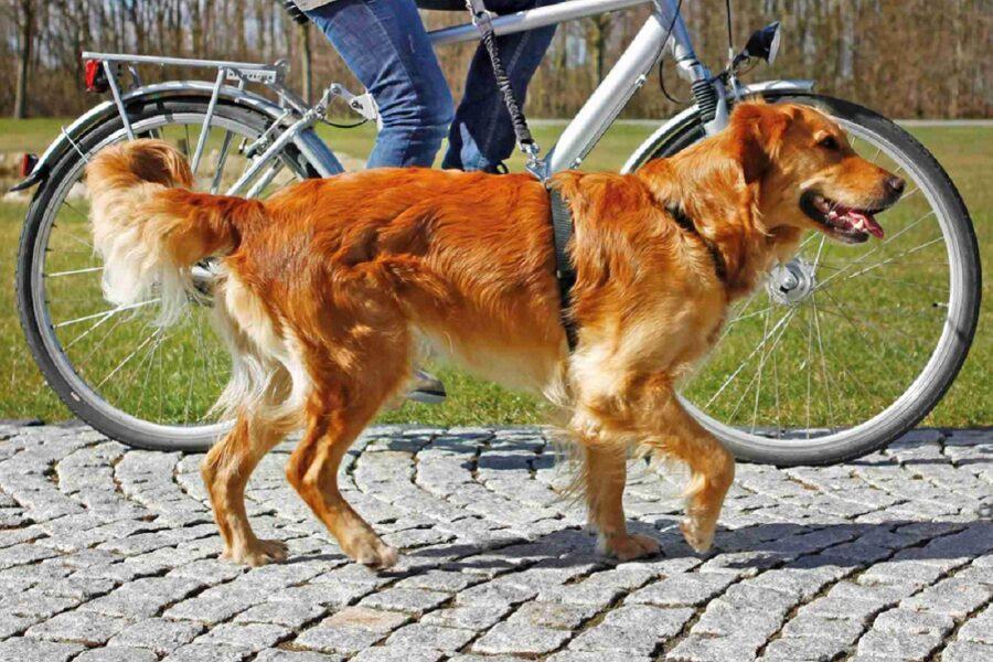 cane passeggia accanto a bicicletta