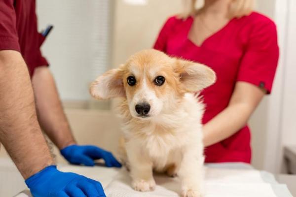cane dal medico veterinario