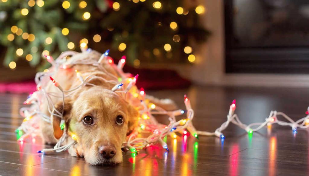 cane e lucine di natale