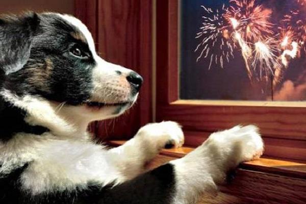 cane che guarda i fuochi d'artificio