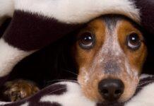 cane spaventato dai botti