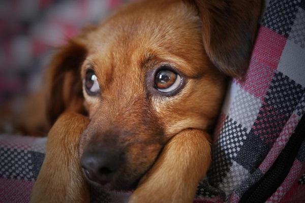 cane che ha paura di qualcosa