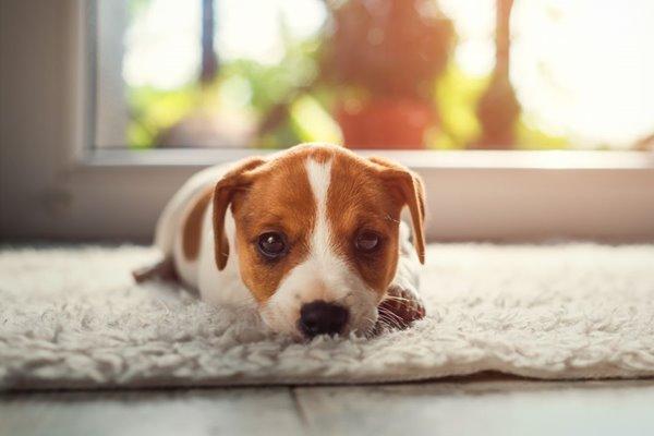 cucciolo spaventato